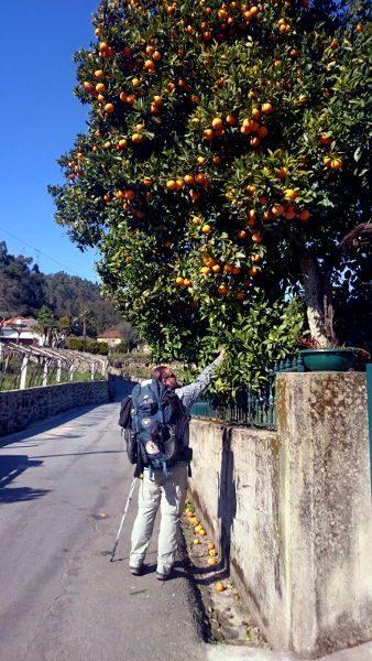 SiebenGruende_orangenbaum_wanderveg