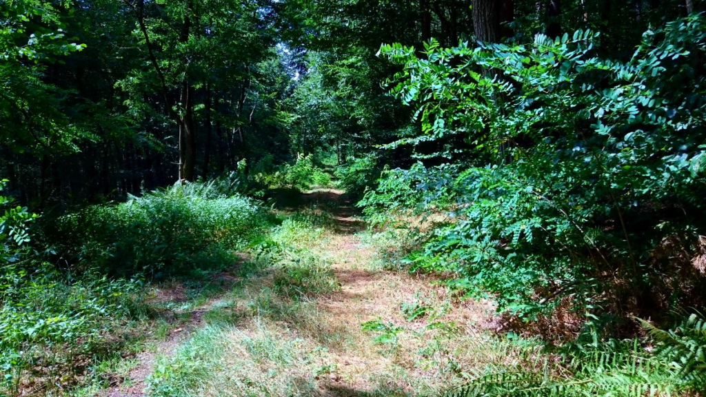 Jakobsweg Wald WanderVeg Domibility