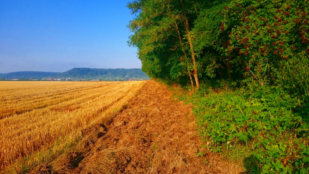 Manchmal führt der Weg auch über frisch gepflügte Äcker und schlecht begehbare Wege. jakobsweg strecke frankreich tagebuch wanderveg domibility