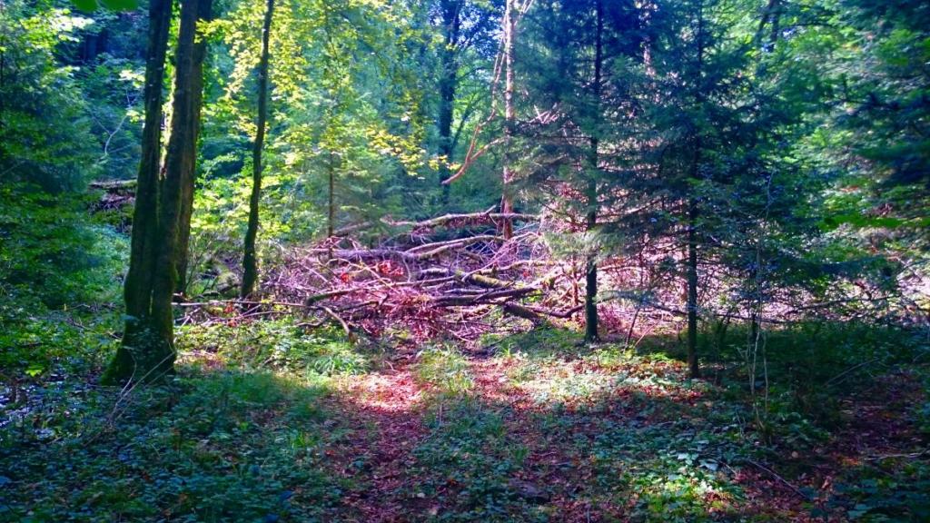 """Der Jakobsweg empfing mich nicht immer mit offenen Armen sondern legte mir auch häufig """"Steine"""" oder eben Baumstämme in den Weg #wanderveg #jakosbweg #tagebuch #steineimweg"""